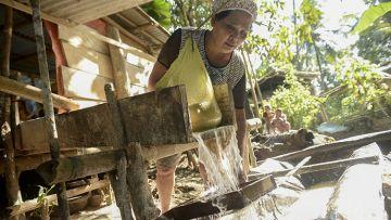 Melirik Budidaya Sagu di Kepulauan Sangihe