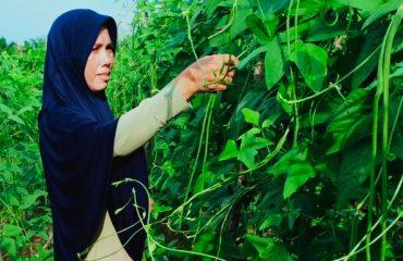 Intensifikasi Pertanian Alami
