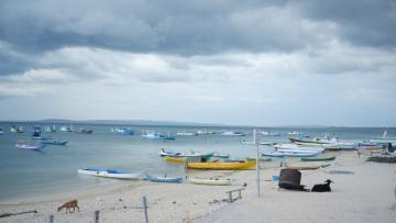 Mengurangi Bycatch, Menyelamatkan Cetacea di TNP Laut Sawu