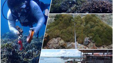 Monitoring Ekologi Terumbu Karang di Desa Bulutui dan Gangga Satu, Minahasa Utara
