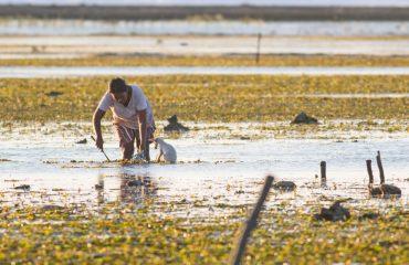 """Makan meting"" pelibatan ekosistem lamun dalam ketahanan pangan  masyarakat pesisir"